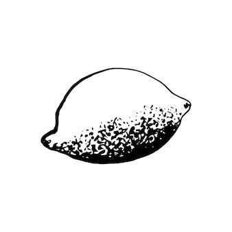 Cute single hand drawn lemon for menu or recipe. doodle vector illustration. fresh and tasty.