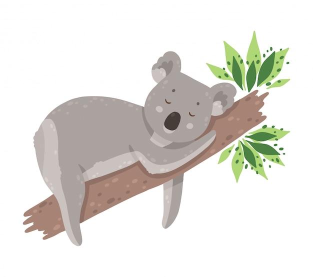Cute sleeping koala isolated