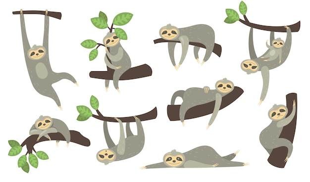 Cute sleepy sloth on branch flat icon set. cartoon character of little sloth hanging, sleeping, lying or playing with baby isolated vector illustration collection.