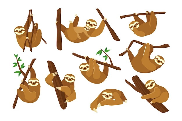 Cute sloth on branch flat pictures collection.