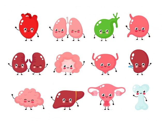 Мило улыбаясь счастливого человека здоровые сильные органы установлены. дизайн иконок иллюстрации персонажа из мультфильма. изолированные на белом фоне сердце, печень, мозг, желудок, легкие, почки, кишечник, орган матки