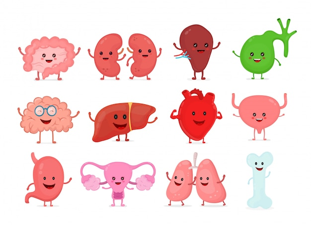 Cute smiling happy human healthy strong organs set.