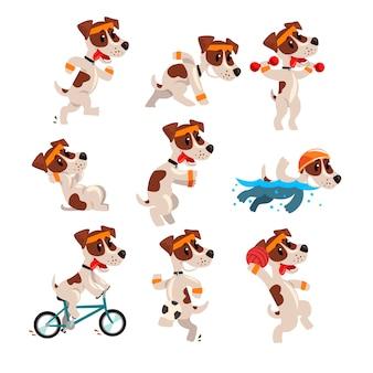 Cute sportive jack russell terrier set