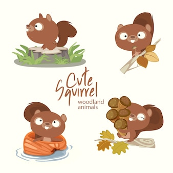 Cute squirrel woodland animals
