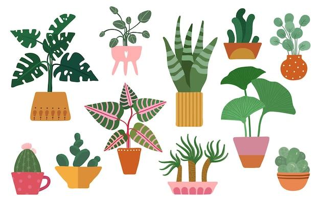 귀여운 다육 식물, 선인장 및 관엽 식물, 화분에 담긴 실내 꽃