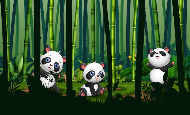 Cute three of pandas in the bamboo forest