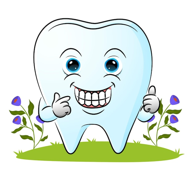 The cute tooth is showing a clean teeth and giving the thumb up of illustration Premium Vector