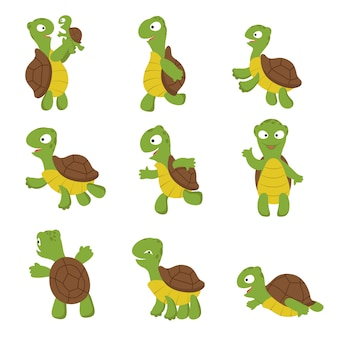 Cute turtle. green tortoise child in various poses.