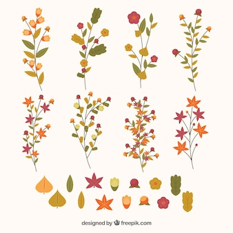 Cute twigs, flowers and leaves in warm colours