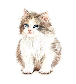 Cute watercolor cat illustration. t-shirt print.
