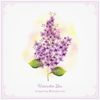 Cute watercolor lilac flower