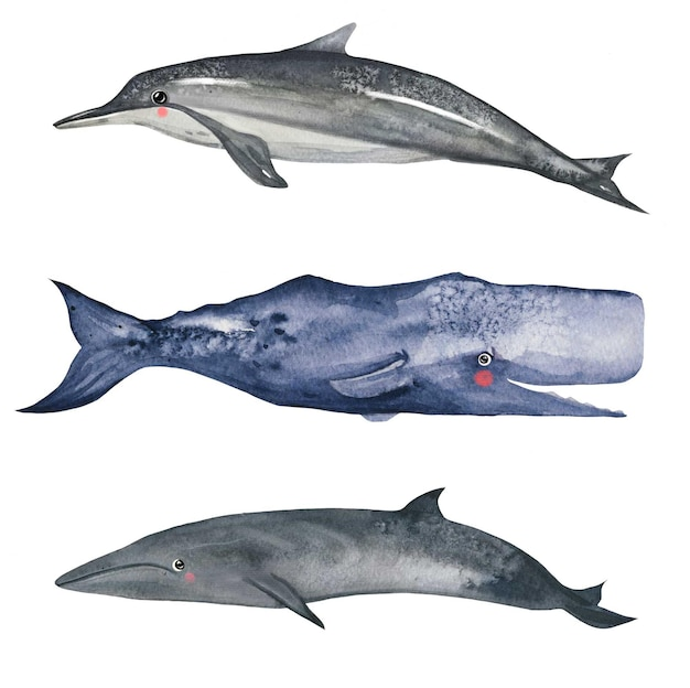 Cute watercolor whale and dolphin set watercolor vector art