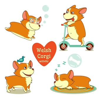 Cute welsh corgi set in different poses. funny corgi activity