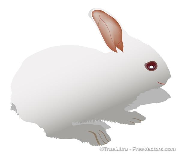 Милый белый кролик