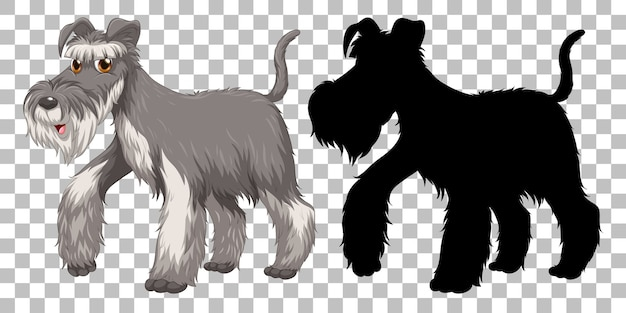 Cute wire fox terrier and its silhouette on transparent background