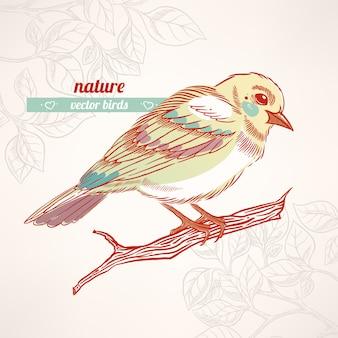 Милая желто-бирюзовая птица