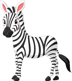 Симпатичный мультфильм зебры