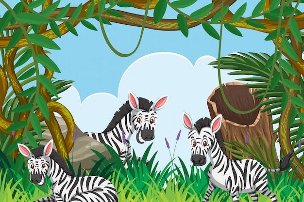 ジャングルのシーンでかわいいシマウマ