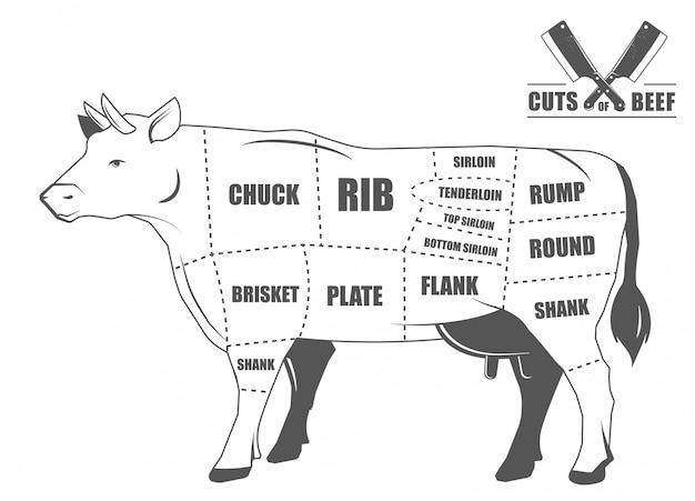 쇠고기 커트. 포스터 정육점 다이어그램-암소. 손으로 그린 빈티지 인쇄상의. 삽화. 흑인과 백인 손으로 그린 이미지입니다.