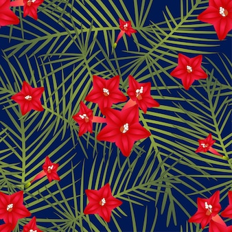 Cypress vine flower on navy blue background