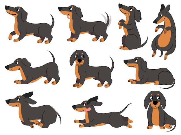 Такса. симпатичные собаки персонажи в различных позах, охотничьи породы, дизайн для принтов, текстиль или открытки, очаровательный векторный набор мультфильмов такса. поза таксы, рисунок родословной собаки, иллюстрация домашнего питомца