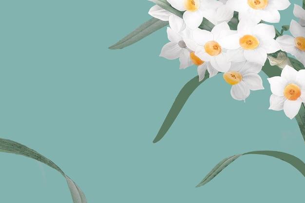Нарцисс границы на зеленом фоне