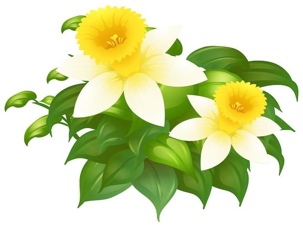 茂みの中の水仙の花