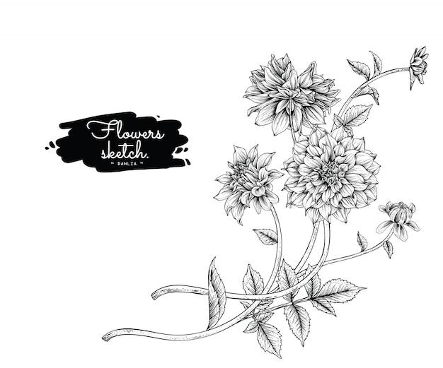 ダリアの葉と花の絵 Premiumベクター