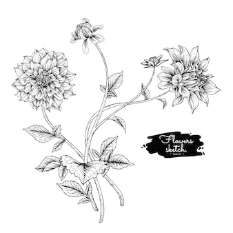 ダリアの葉と花の絵