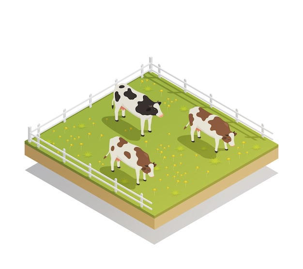 Dairy pasture isometric composition