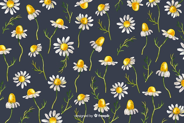 Daisies decorative background watercolor style