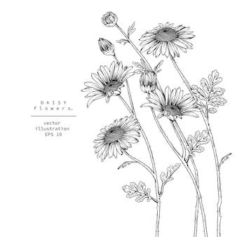 デイジーの花の描画。
