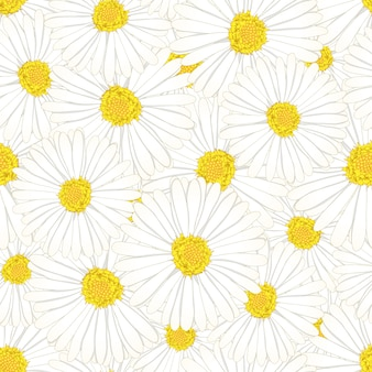 Daisy flower seamless background.