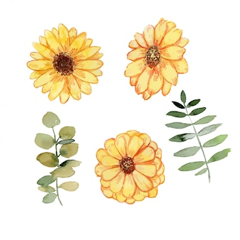 Daisy flower watercolor set
