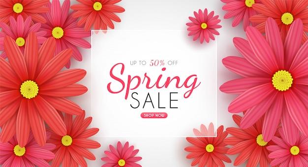 Цветение маргаритки цветет в сезонной весне и продвижение скидки покупок для продажи и предпосылка.