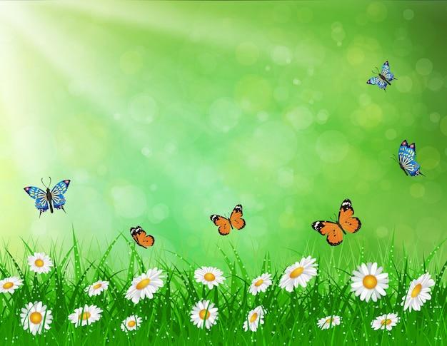 Daisy vector background summer design