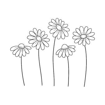 Дейзи полевые цветы контурный рисунок линии векторные иллюстрации