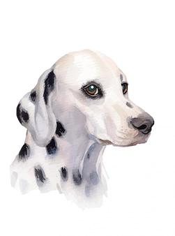Далматин собака портрет акварель