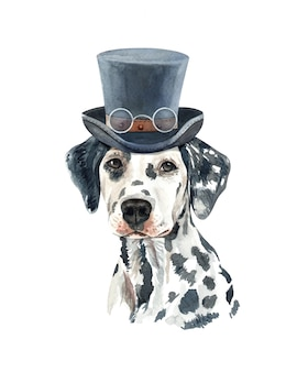Dalmatian dog watercolor with costume.