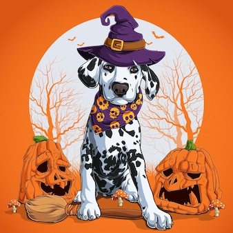 Далматин в костюме хэллоуина сидит на метле и в шляпе ведьмы с тыквами по бокам