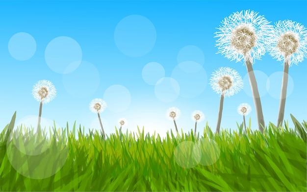 Одуванчик и трава в солнечный день