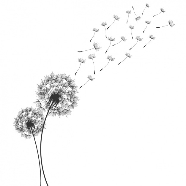 dandelion vectors photos and psd files free download rh freepik com dandelion clipart black and white dandelion clip art free