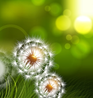 Dandelion field spring conceptual background
