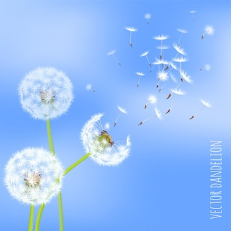 바람에 날리는 민들레 씨앗