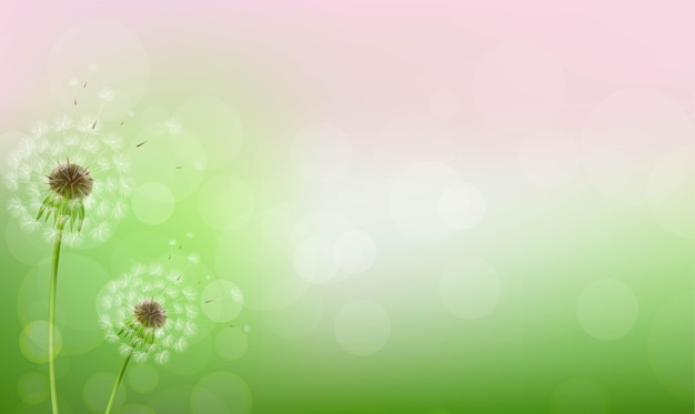 Dandelions and bokeh lights background