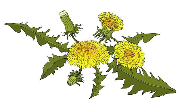 Иллюстрация одуванчиков doodle