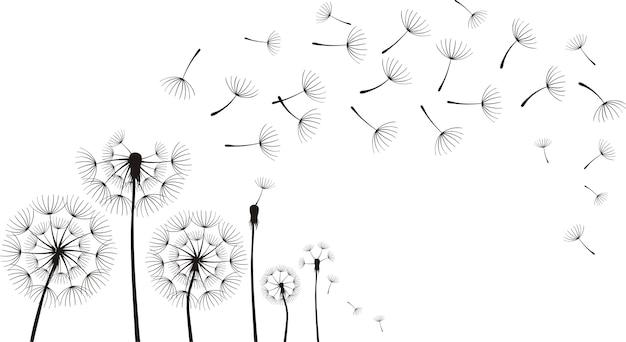 Dandelions on the white background.