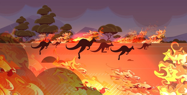 Dangerous wildfire bush fire australia forest fires with silhouette of wild animals kangaroo fire development dry woods burning trees natural disaster concept intense orange flames horizontal