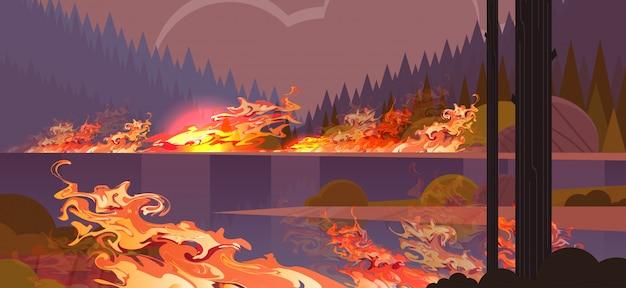 위험한 산불 덤불 화재 개발 마른 숲 불타는 나무 지구 온난화 자연 재해 개념 강렬한 주황색 불꽃 가로