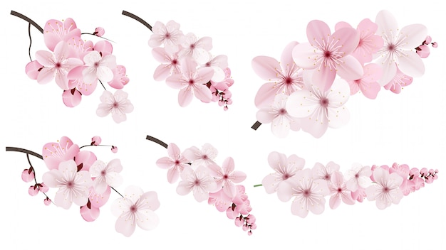 Dark and light pink sakura  flowers.